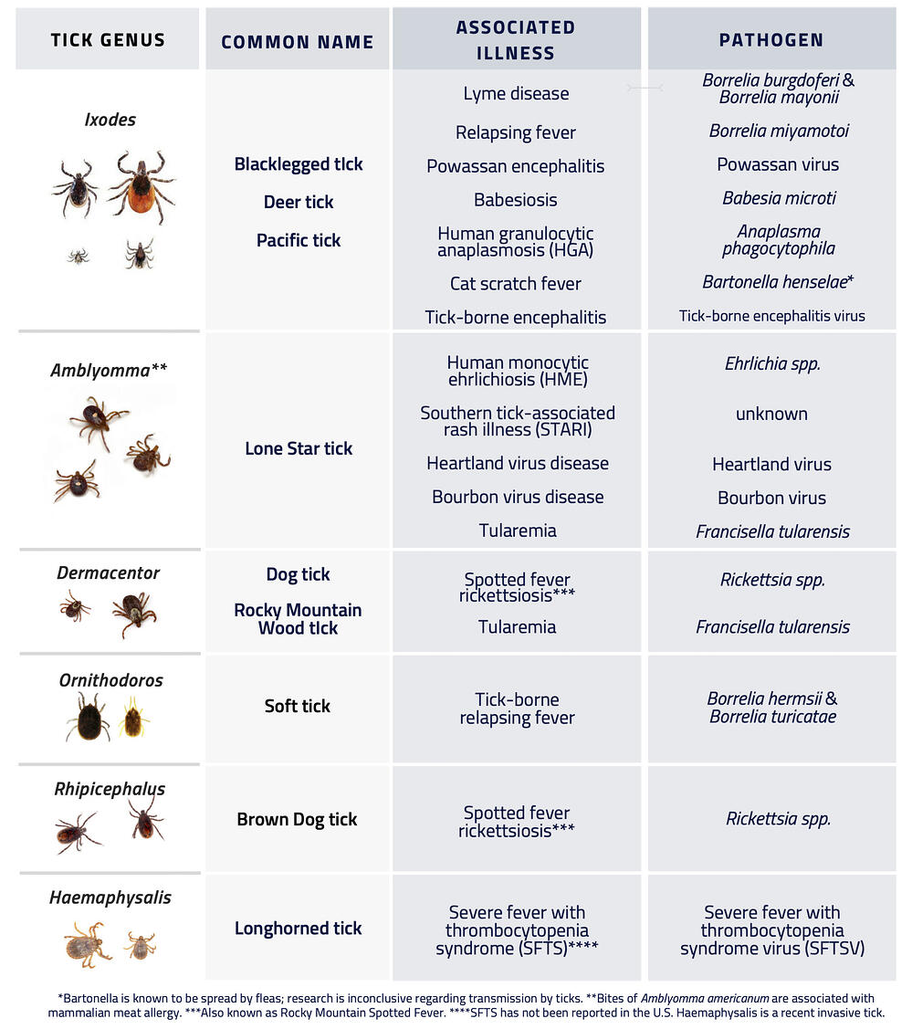 Tick Table