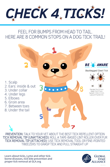 check 4 ticks dogs_lyme disease in dogs