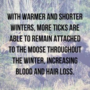 blog_ghost moose_quote