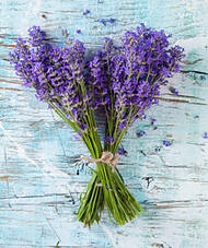 ticks_lavender