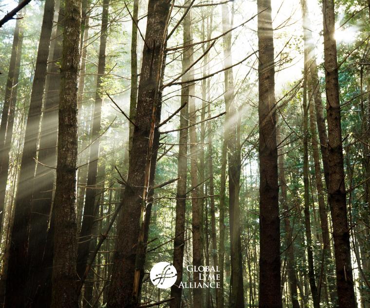 Borrelia miyamotoi: Hiding in Plain Sight?